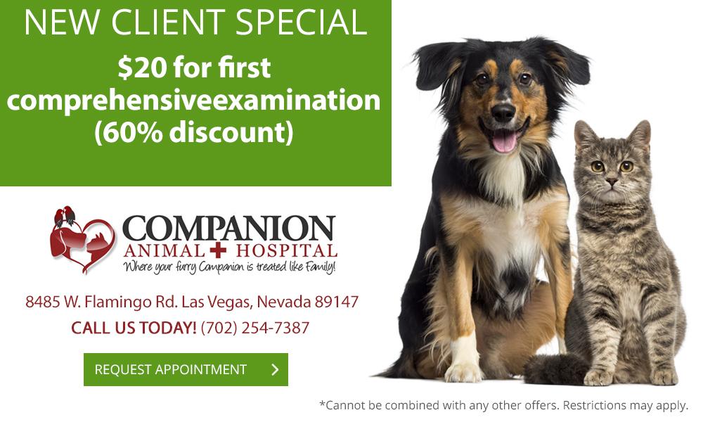 veterinary specials in las vegas  nv